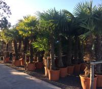 illustration secondaire de Palmiers et plantes méditerranéennes