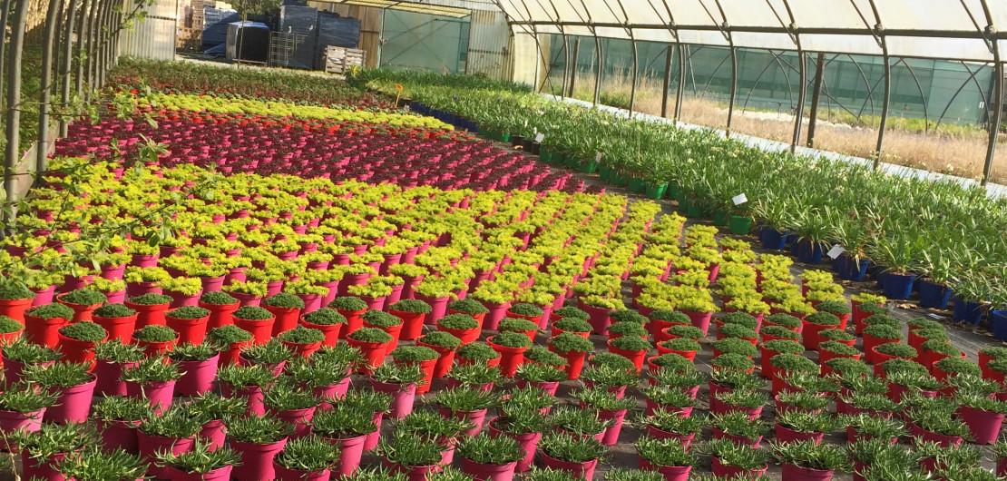 plantes des pépinières brenelière