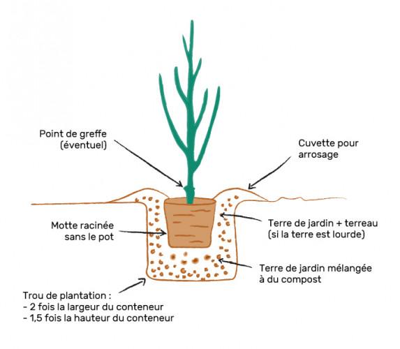 schema_plantation_v3