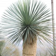 illustration principal de Palmiers et plantes méditerranéennes