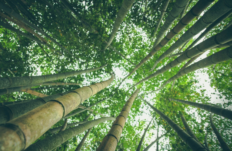 bamboo-forest-1245966_1920