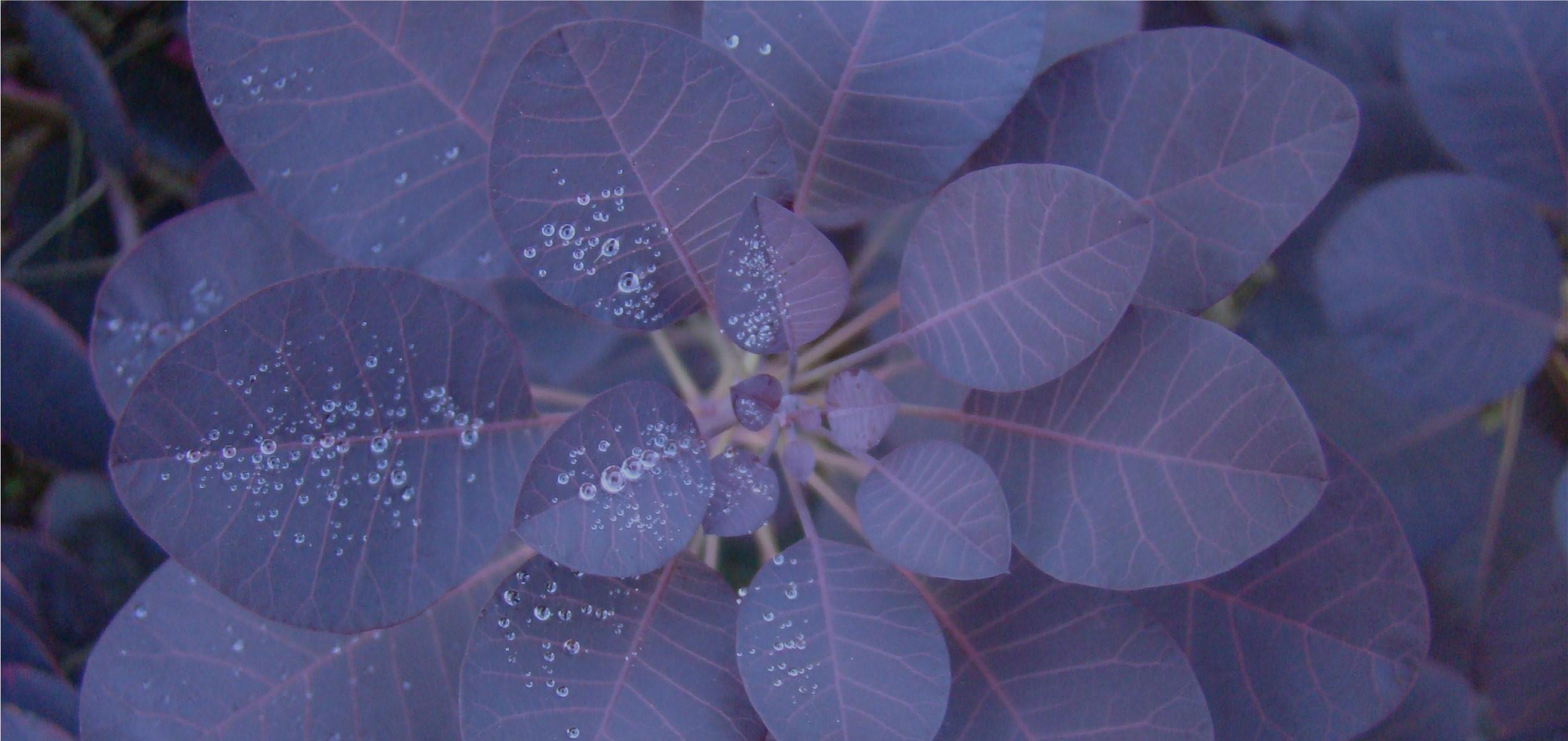 plante des pépinières brenelière